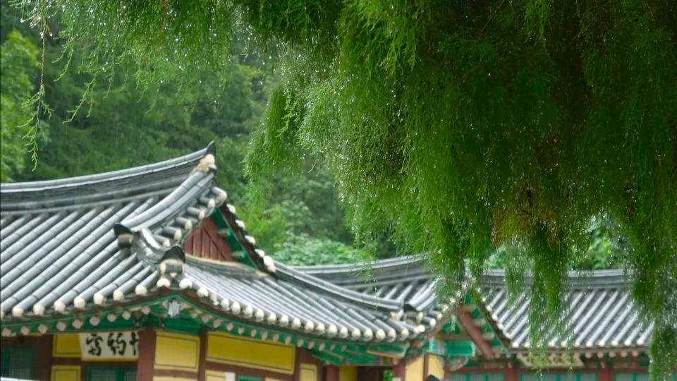 护眼绿树雨