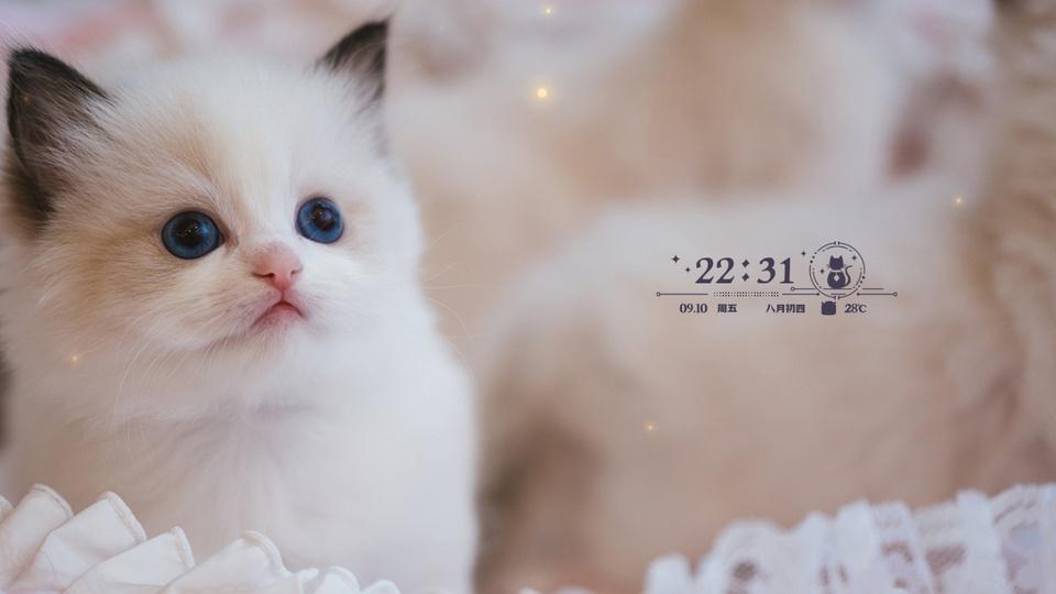 可爱猫咪时钟