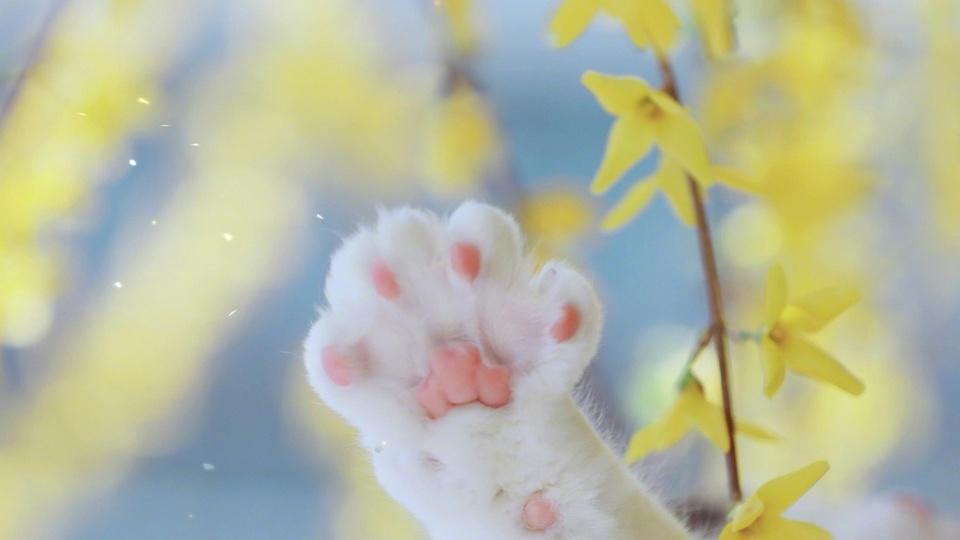 想抓花瓣的小猫咪